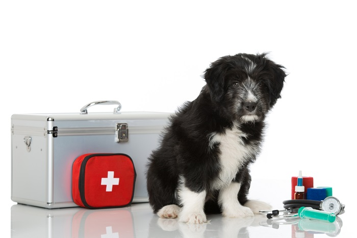 premiers soins animaux compagnies